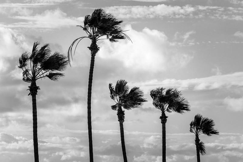 daytime beach-4924.jpg