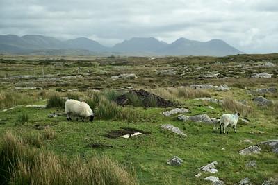 Ireland Go West Photos (click for larger photos)