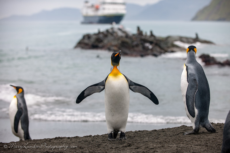 Antarctic-129