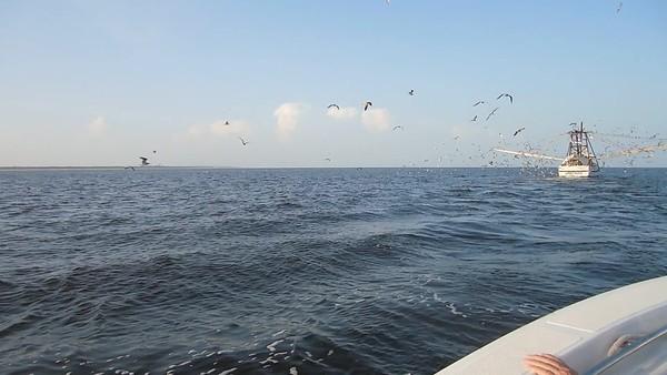 Jekyll Island Boat Tours Dolphin Daze Dolphin Videos 09-05-20