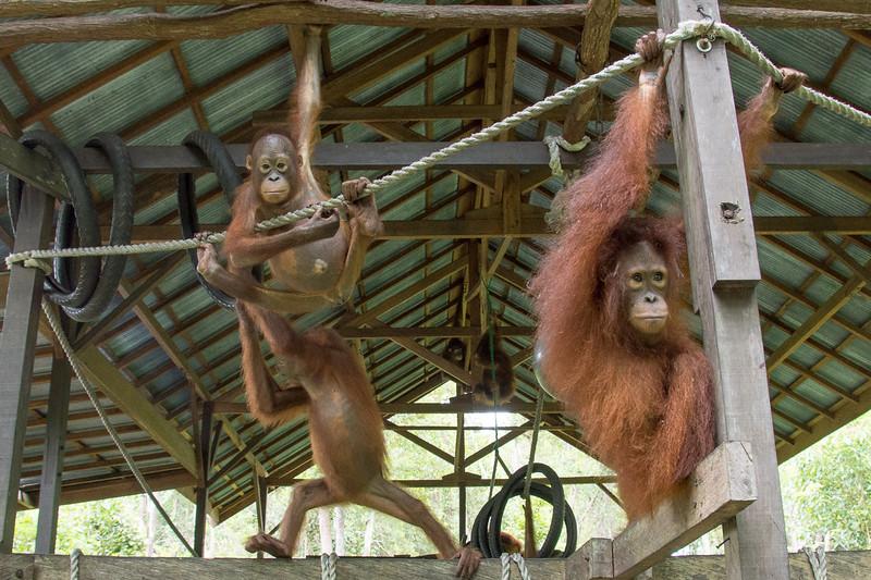Borneo-2239.jpg