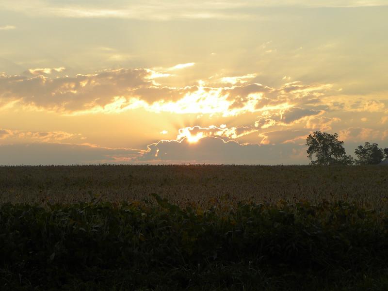 Sunrise Over Soybean Field - Auburn