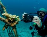 diver photo .jpg