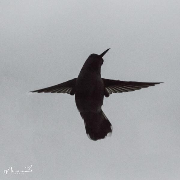 2021 - The Hummingbird Chronicles-0701_edit.jpg
