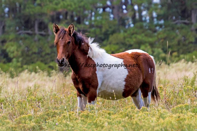 2019 Pony Spotting