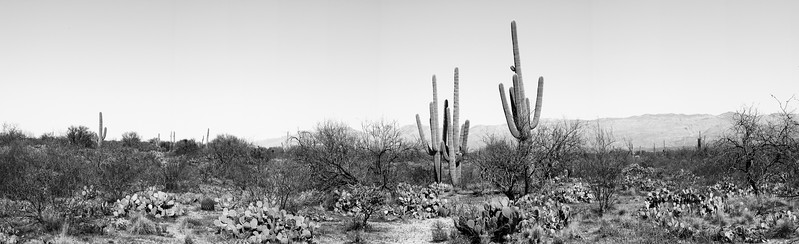 In the heat of the day Saguaro NP