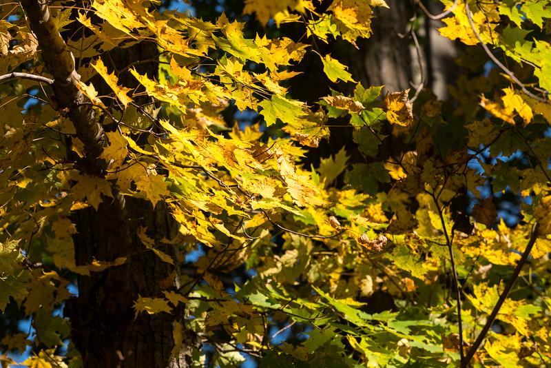 queen esther-foliage-2015-15.jpg