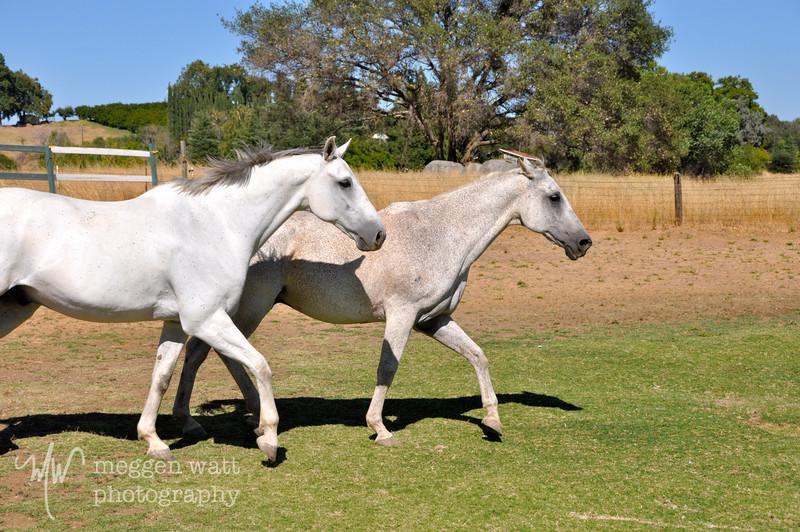 EB&Horses-128.jpg
