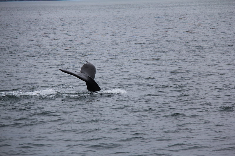 20160717-053 - WEX-Whales.JPG