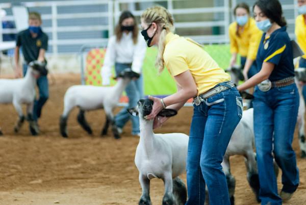 Tulsa Market Lambs