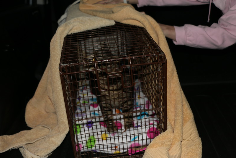 Trapping Mom and Kittens - 040115 - 16.JPG