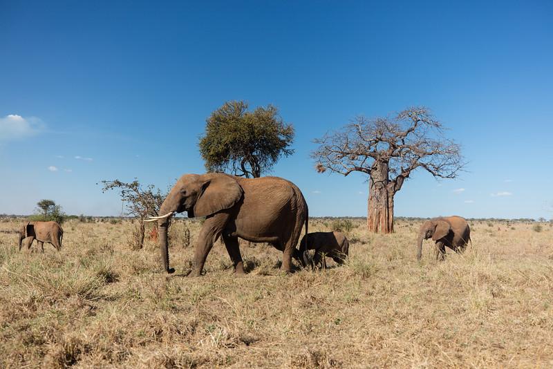 Africa - 102016 - 7879.jpg