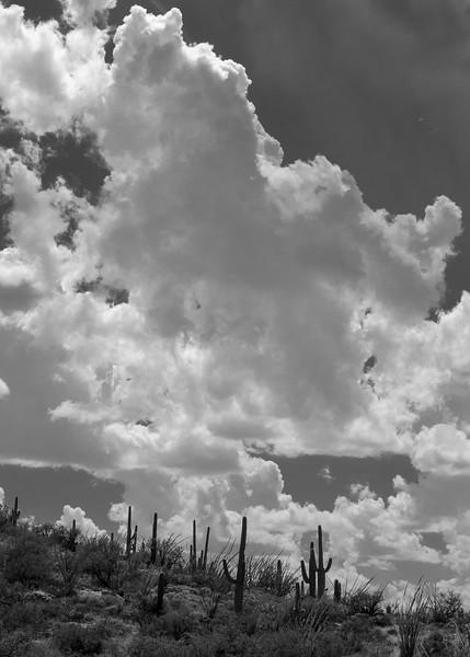 20180902-Saguaro-NP-East-4357.jpg