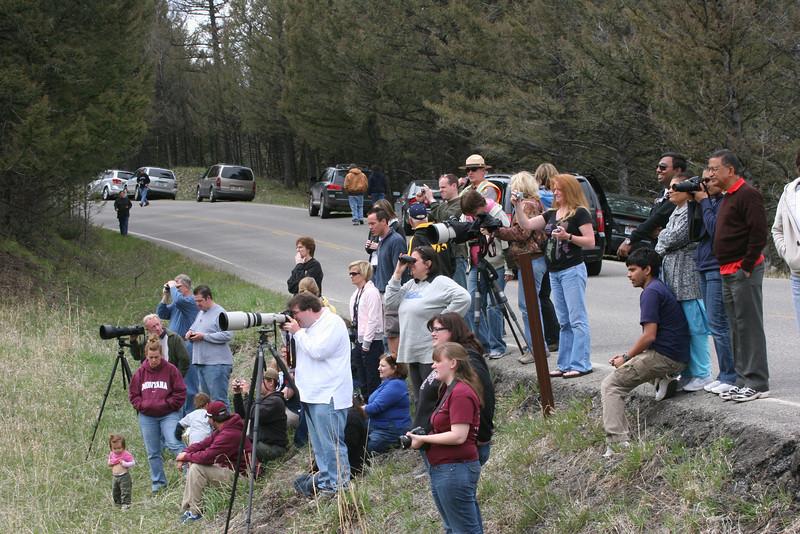 crowd watching the bears