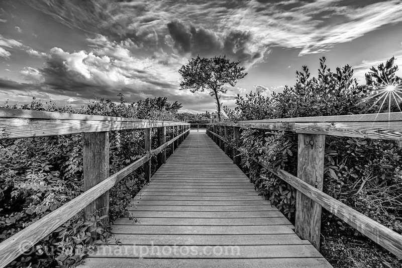 Thru the Mangroves