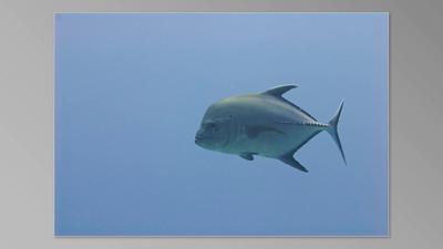 Sharks & Other Denizens of the Deep