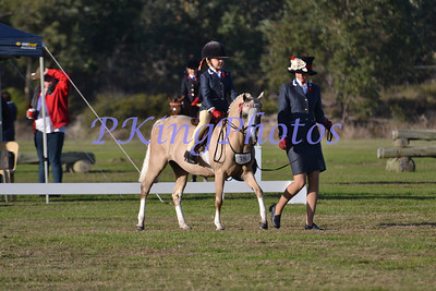 2012 Show Horse Council Classic & Saddles Plus Debutante
