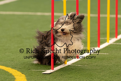 Delaware Valley German Shepherd Dog Club AKC Agility Trial June 26-27