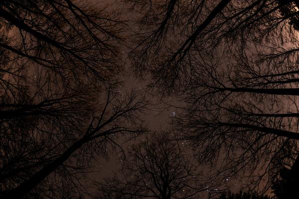 Tealtown Forest Night Skies