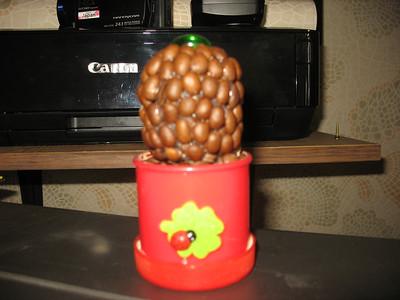 2013-10-10, Coffee tree