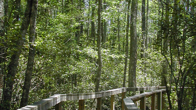 Cary State Forest Nature Trail