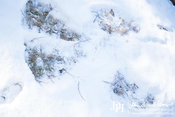 2018 01 17 Snow