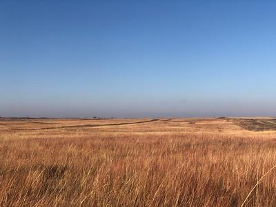 Pheasant Hunting in Kansas '18