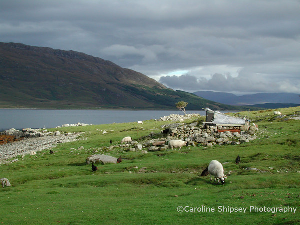 Moll - Isle of Skye