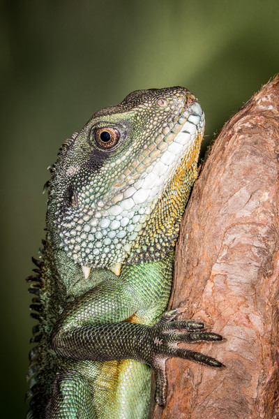 Frogs14jan17-4330.jpg