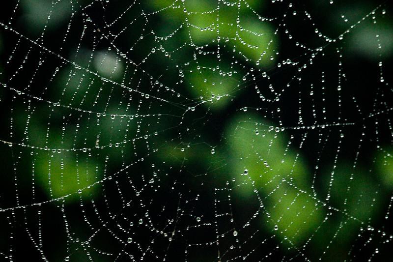 oct4_spiderweb.jpg