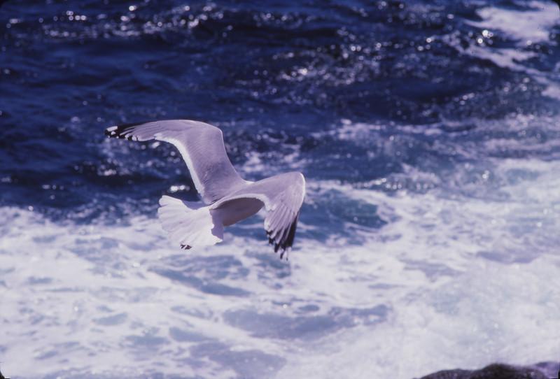 Nova Scotia 1983 - 079.jpg