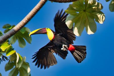 2019 - Costa Rica: Dominical & La Carolina Lodge (Alajuela Province)