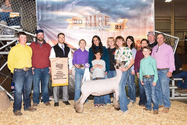 Jr Fed Market Sheep Show