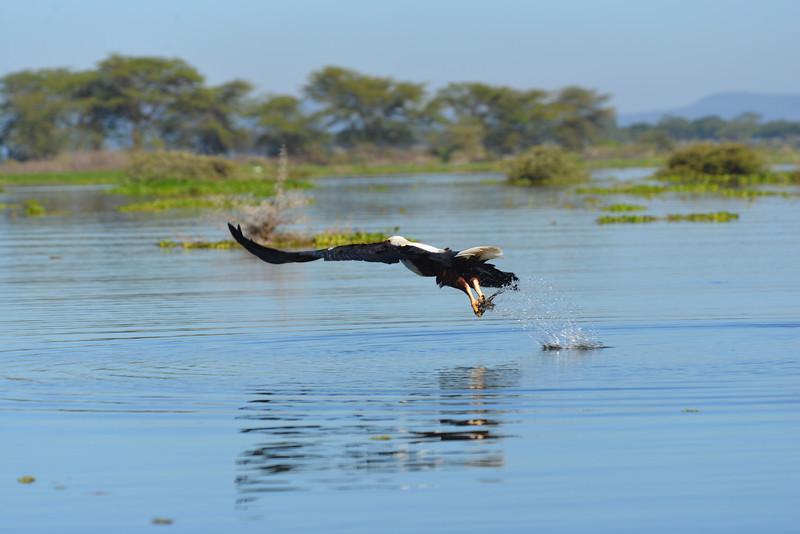 East Africa Safari 149.jpg