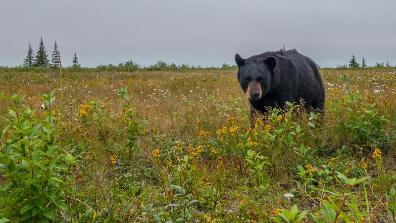 polar-bear-lodge-nanuk-churchill-wild-5.jpg