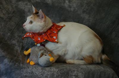 Pet Halloween Pics 13