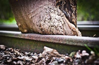 17.04.2011Spazieren im Wald
