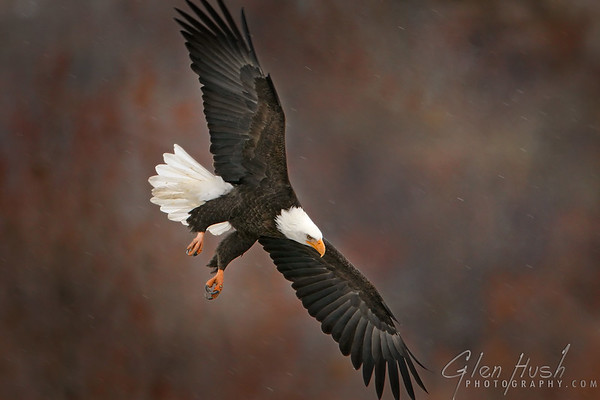 Eagle110_16x24
