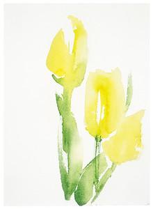 """Botanical Study - Tulip #13"" (watercolor) by Vega Davis"