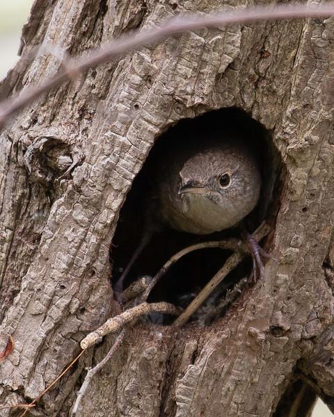 wren nest.jpg