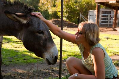 2008 Donkeys in Palo Alto