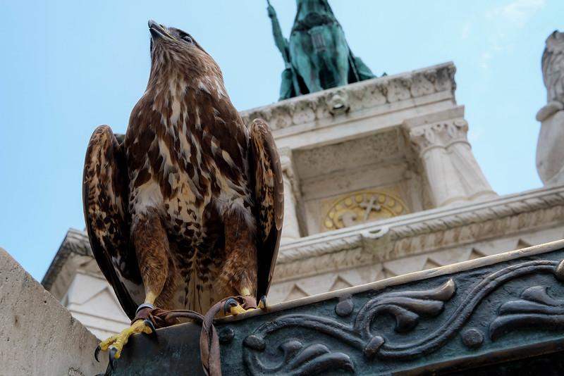 Budapest_Hungary-160701-51.jpg