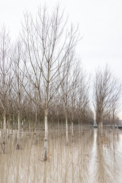 Secchia's Flood - Soliera, Modena, Italy - December 12, 2017