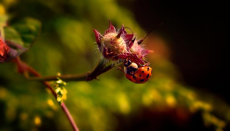 Bugs and Beetles - 86.jpg