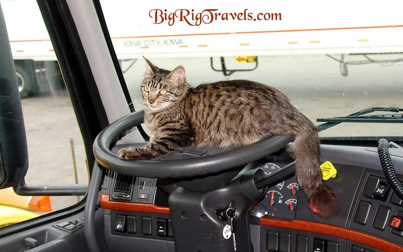 T.K. on steering wheel Wallpaper1440x900.jpg