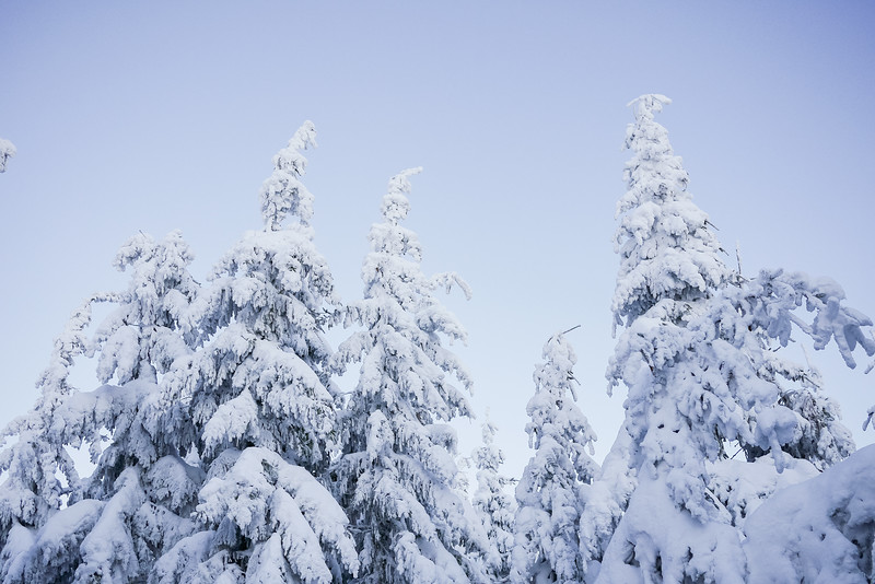 snowy-trees-and-blue-cloudless-sky-picjumbo-com.jpg