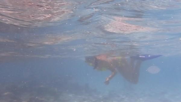 Snorkel Videos