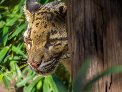 Animals and Wildlife