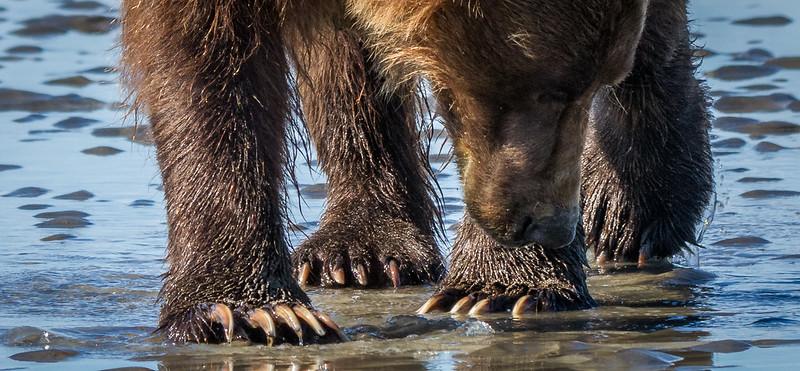 2015-07-18_Bears_Canon7D_6376.jpg