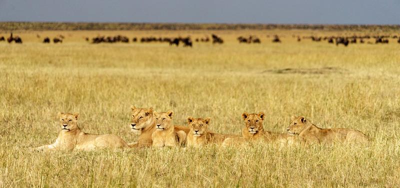 Kenya 2015-05937.jpg